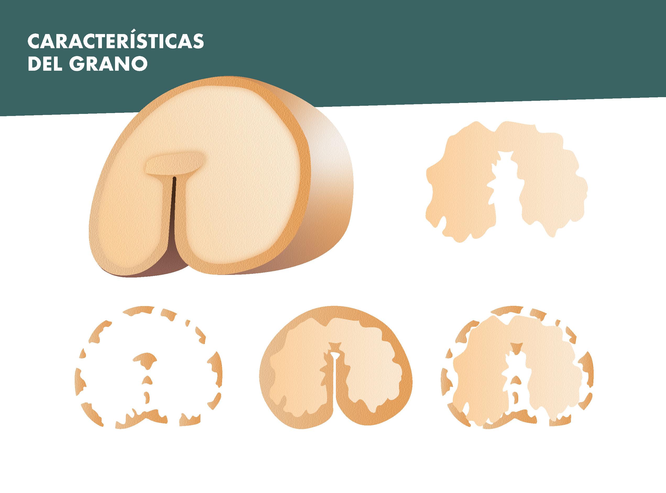 Características del grano